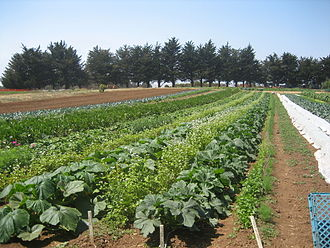 University of California, Santa Cruz - Organic farm rows