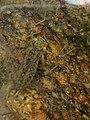 Under Water (14368298449).jpg