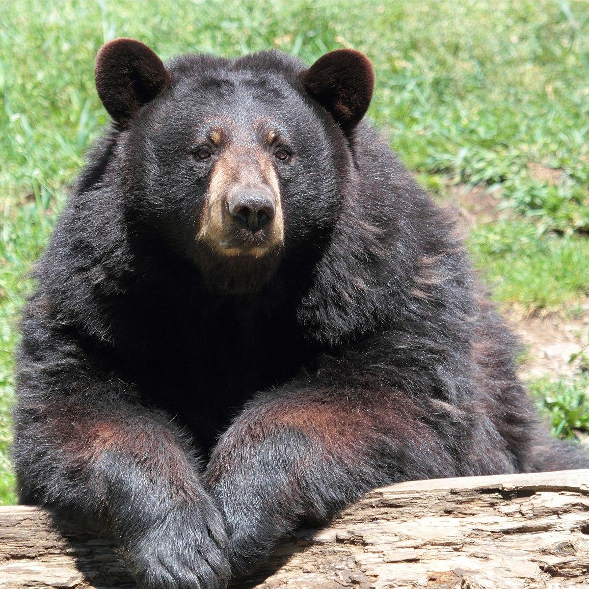 миг приходит медведи в америке картинки эти носители информации