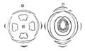 Urtica flowerdiagram.png