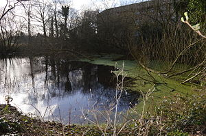 London Wildlife Trust - at=Uxbridge College Pond