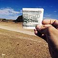 Valle dei sicomori, il grande sicomoro, confronto con la moneta da 5 nakfa 2.jpg