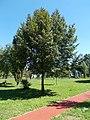 Varaždin twin town memorial tree, Vizslapark, 2020 Zalaegerszeg.jpg