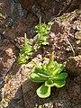 Vegetation rocks.JPG