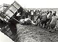 Verongelukte veewagen op de A.9, bij de Groeneweg. Geschonken in 1986 door United Photos De Boer B.V.JPG