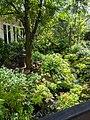 View inside Butterfly Garden.jpg