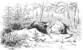 The Fir-Tree - Illustration by Vilhelm Pedersen, Andersen's first illustrator