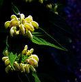 Virág a zirci arborétumban.jpg
