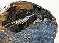 Vivianite-200647.jpg