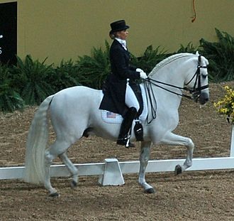 Dressage - An Andalusian at the passage in a hollowed frame (note the dip behind the saddle).