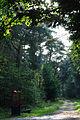 Wald 018.jpg