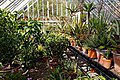 Walled garden greenhouse at Myddelton House, Enfield, London, England 03.jpg