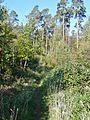 Wanderweg - panoramio (2).jpg