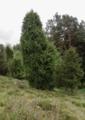 Wartenberg Landenhausen Trockenrasen Auf dem Buchenwald Juniperus Ericales 555520689 2.png