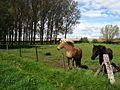 Weiland Laar - panoramio.jpg