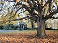 West Leake Church Lych Gate and Chestnut Tree - geograph.org.uk - 2703.jpg