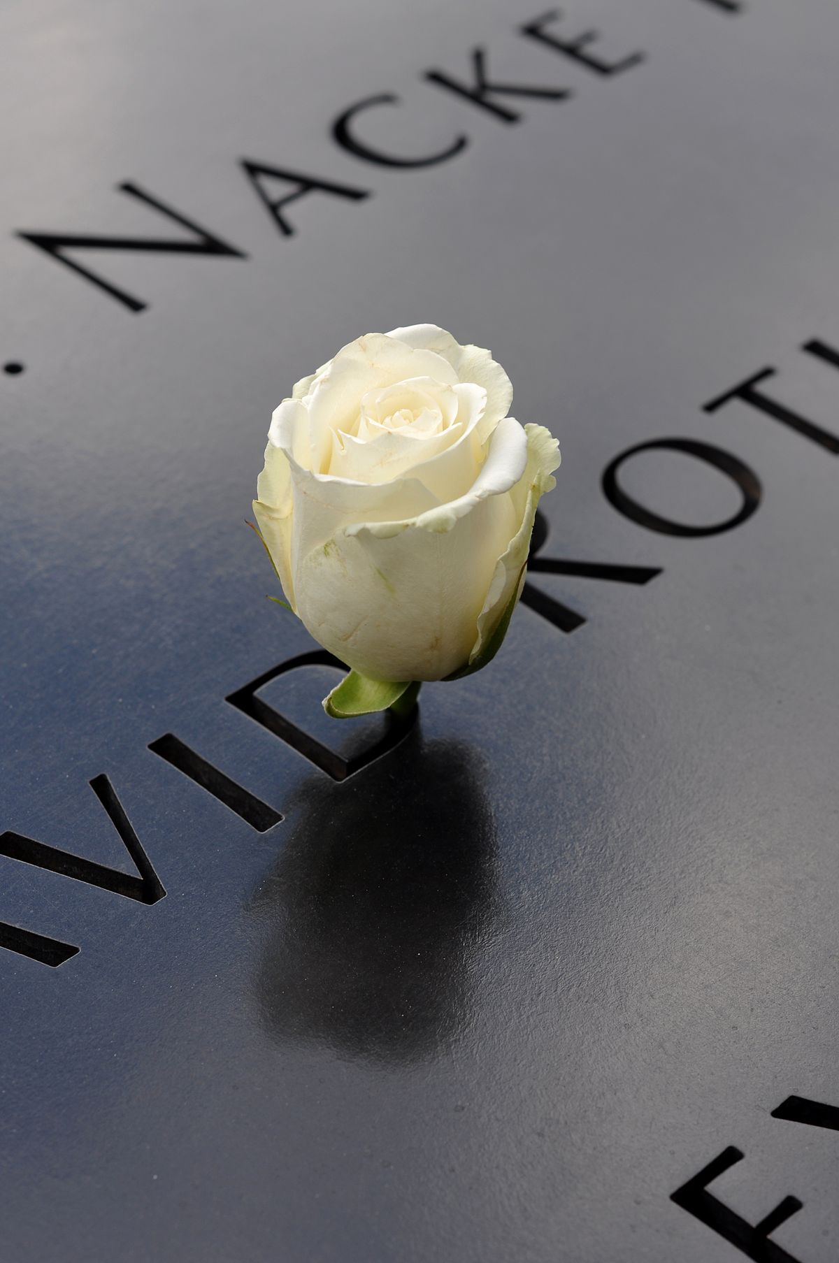 White-rose-at-9-11-memorial.JPG