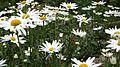 White Garden 2.jpg