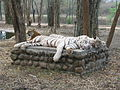 White Tigers at Bannerghatta National Park 4-24-2011 12-22-47 PM.JPG