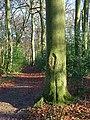 Widmore Wood, Asheridge - geograph.org.uk - 1081204.jpg