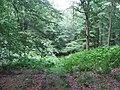 Wike Wood. - geograph.org.uk - 217488.jpg