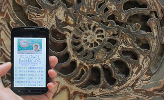 Virtual museum - Wikipedia mobile app, article for ammonite in Japanese in front of an ammonite at the Natural History Museum, London