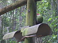 Wild Adventures Bird House 051114 08a.JPG