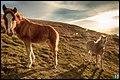 Wild Horses (50605840).jpeg