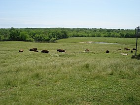 a herd of bison on a rolling prairie, with water