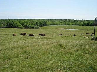 Wildlife Prairie Park - Image: Wildlife Prairie Park 2007 05 27 Bison 5