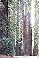 Williams Grove - Humboldt Redwoods State Park - DSC02404.JPG
