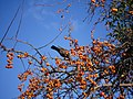 Winter Bird (196033189).jpeg