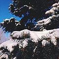 Winter Branch (57426944).jpeg