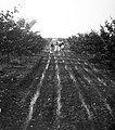 Women, agriculture, village, work Fortepan 10231.jpg