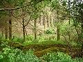 Woodland, Glaninchiquin - geograph.org.uk - 287800.jpg