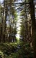 Woodland, south bank of Thruscross Reservoir - geograph.org.uk - 489810.jpg