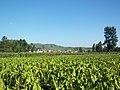 Zhaoyang, Zhaotong, Yunnan, China - panoramio (6).jpg