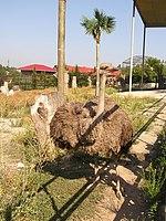 Zoo in Yalta 003.jpg