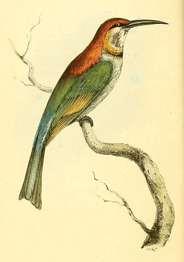 Zoological Illustrations Volume I Plate 8.jpg