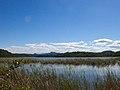 Áreas úmidas na Lagoa Maimbá.jpg