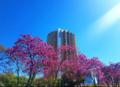 Ĉefsidejo de Caixa Econômica Federal en Braziljo, Brazilo.png