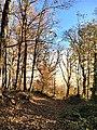 Καστανοδασος στην Τσαγκαραδα.jpg
