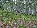 Березовые рощи в окрестностях озера Якты-Куль.jpg