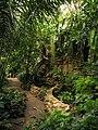Ботанический сад РАН, тропическая оранжерея.jpg