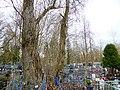 Все старые деревья на Рождественском кладбище 02.jpg