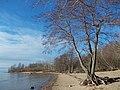 Дерево с подмытыми корнями.jpg