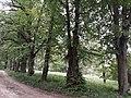 Липова алея. парк.jpg
