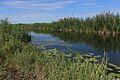 На берегу речки Бурти - panoramio.jpg