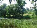 Озеро Гнилуша.JPG