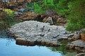 Павлины у Мертвого озера, Локрум.jpg